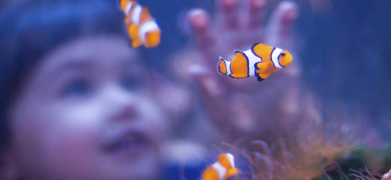 Aquarium ooreka - Coupure d eau qui contacter ...